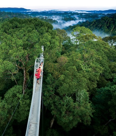 Canopy Walk Ulu Temburong National Park