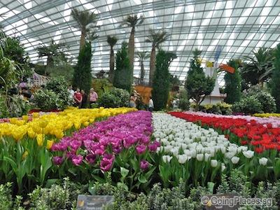Tulips at Gardens By The Bay