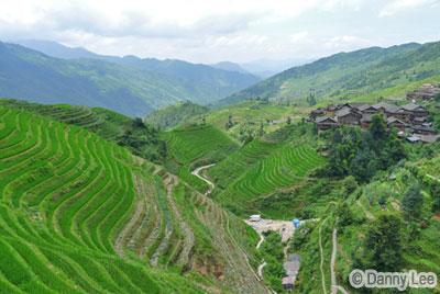 Guilin Longji Rice Terrace