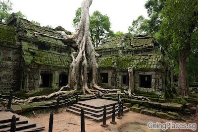 Ta Prohm, Cambodia by Calvin Shi