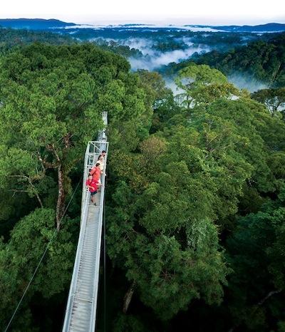 Canopy Walk Ulu Temburong National Park