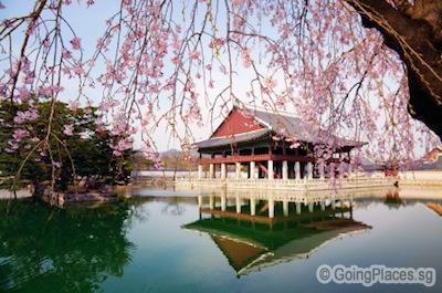 South Korea Muslim Tour