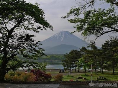 Mount Fuji And Lake Shoji