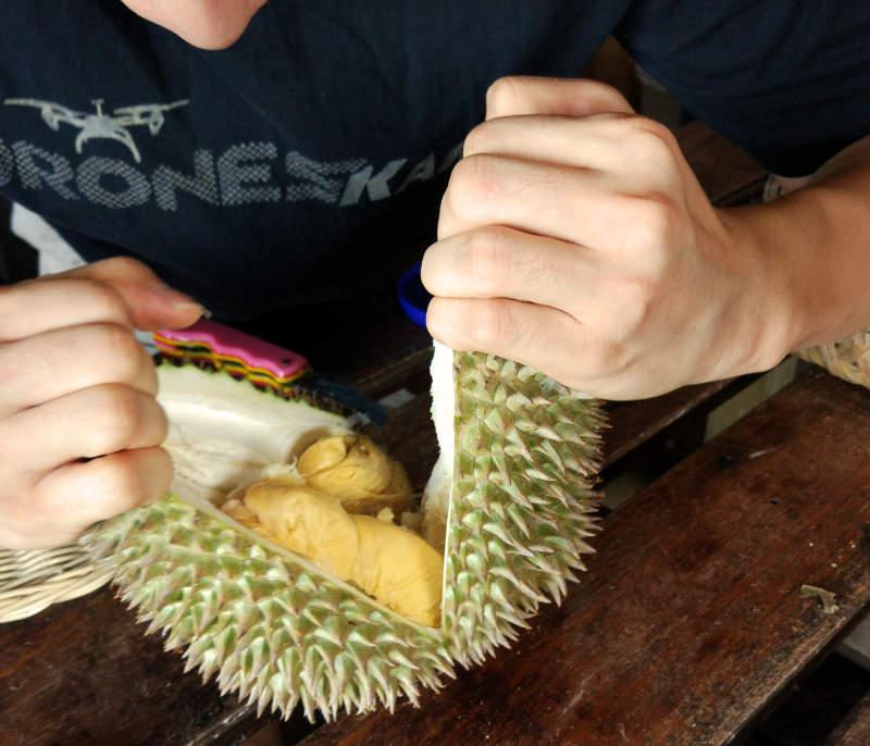 Bao Sheng Durian Farm, Penang