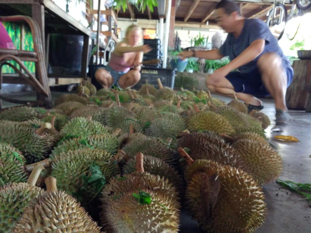 2D1N Durian Farmstay at Balik Pulau, Penang